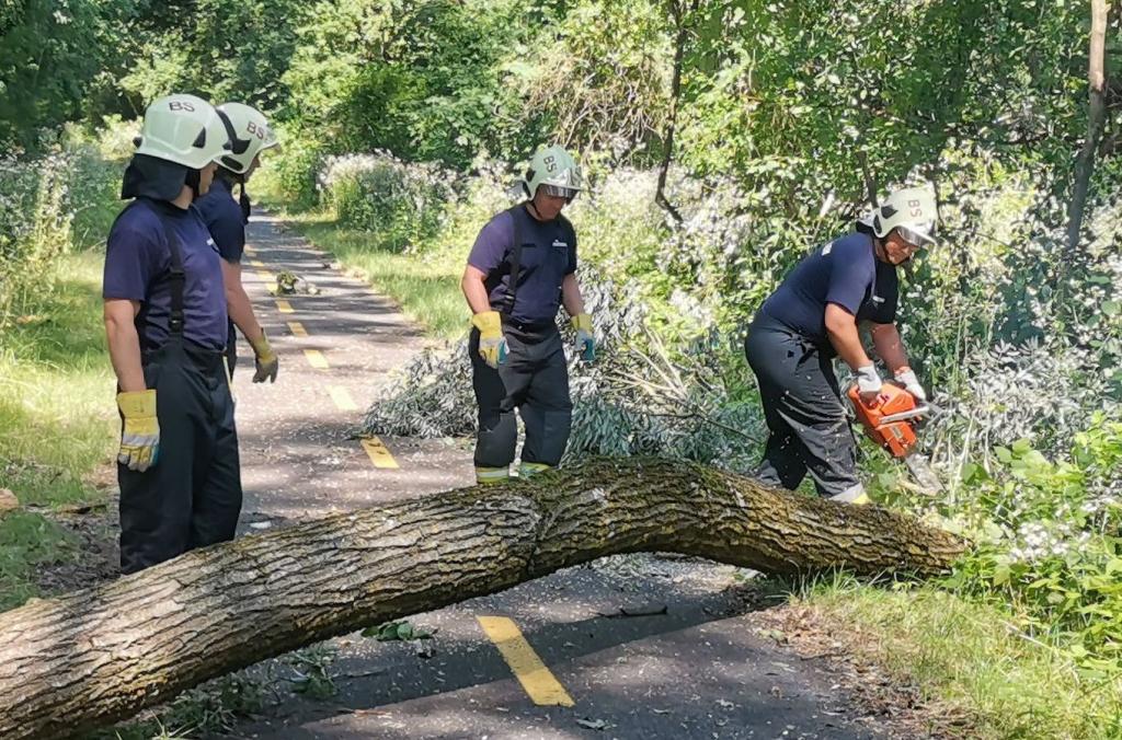 Kerékpárosok útját akadályozta egy kidőlt fa