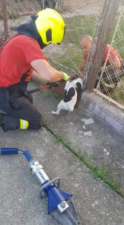 tűzoltók szabadítják ki a beszorult kutyát a kerítés elemei közül