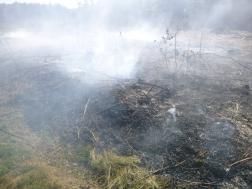leégett füves terület
